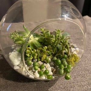 finished terrarium front view